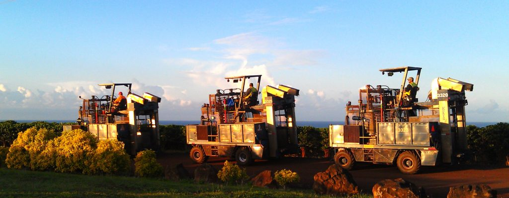 9 Fascinating Facts About the Kauai Coffee Harvest