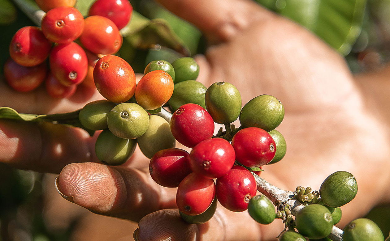 What is Single-Origin Coffee?
