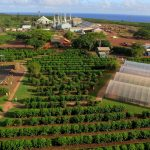 aerial view of Kauai Coffee farm and visitor center