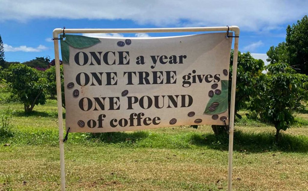 banner in the kauai coffee orchard that reads once a year one tree gives one pound of coffee