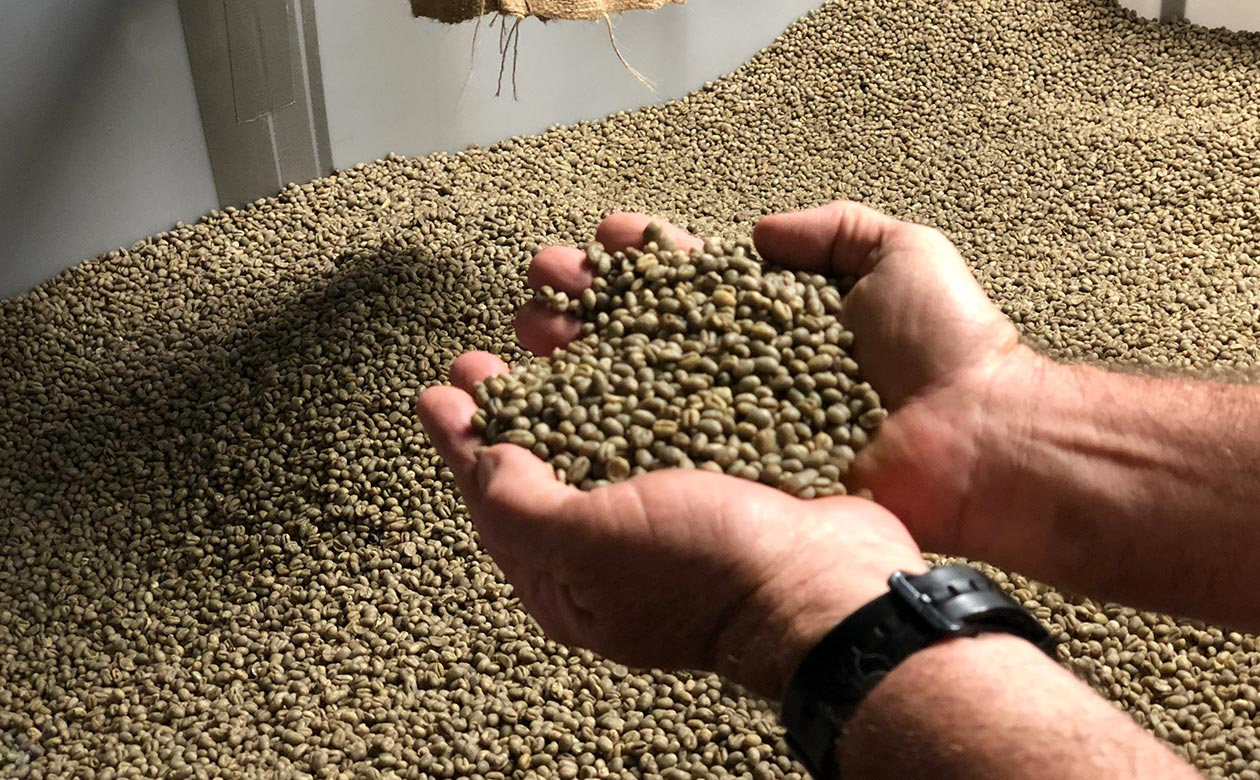 hands holding green kauai coffee beans