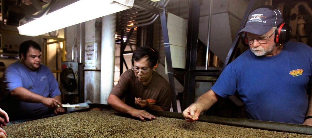 kauai coffee employees examining dried coffee beans