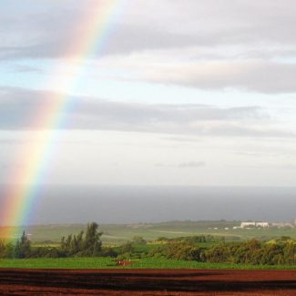 rainbow over kauai coffee fileds