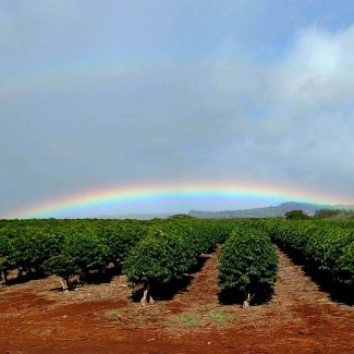 kauai coffee farm rainbow