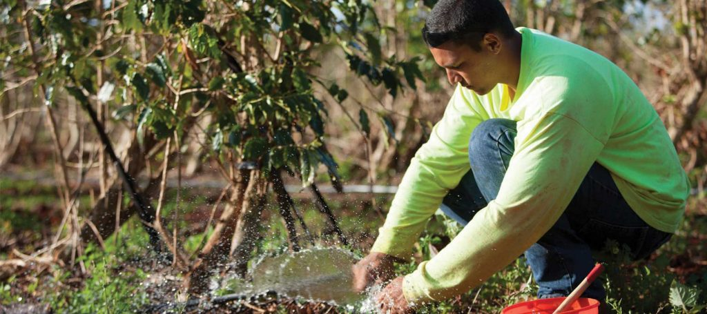 what sustainability means atKauai Coffee